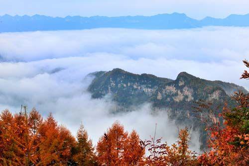 是山野乡间的火棘挂满果实,红若似火,更是广元秋日里的亮丽色彩.