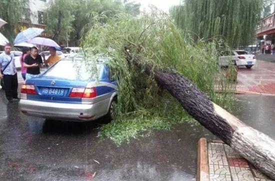 体运村路上大树倒下,砸中出租车
