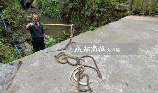 三辆面包车开进村 被阻止后仍偷偷放蛇