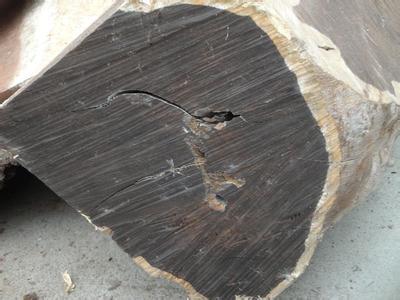 南充在建工地挖出7根千年以上的乌木