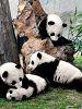 持熊猫卡逛成都全攻略