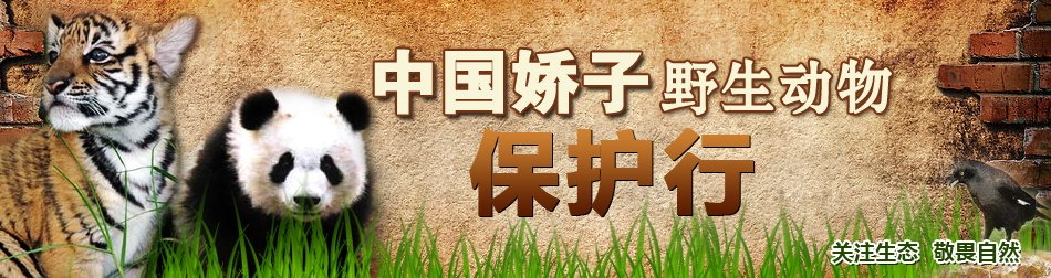 百万青年保护野生动物签名活动