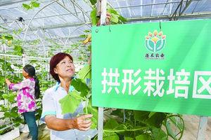 天福万象农业博览园打造新农村经济增长点