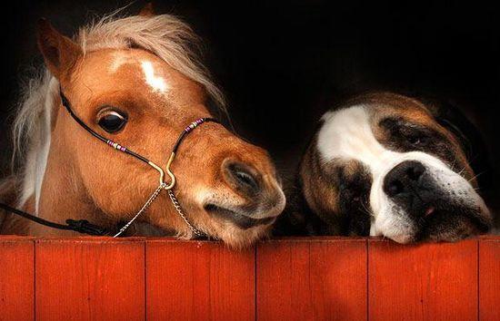09年世界最可爱的动物