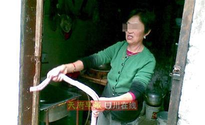 """活捉长蛇 六旬太婆手脚麻利 杀蛇炖汤?太婆遭邻居""""声讨"""""""
