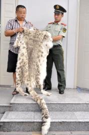 成都公安查获近两年涉嫌非法售卖野生动物制品最大的案件