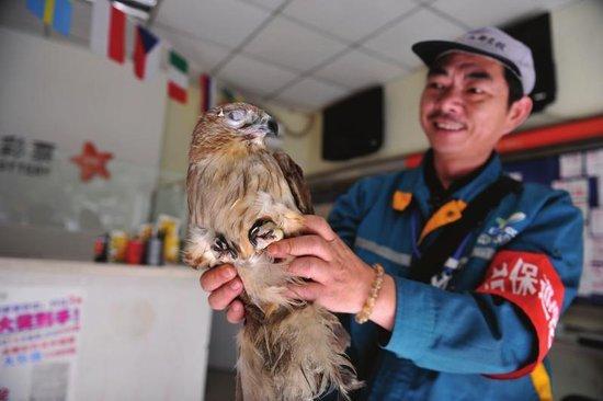 10月27日,成都实业街,刘师傅正在照顾雀鹰。