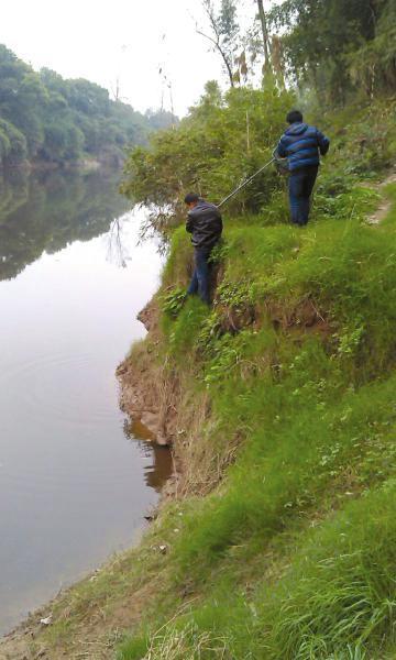 泸县市民正在打捞黄鳝。