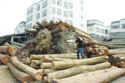 警方在崇州羊马查获的楠木(省森林公安局供图)