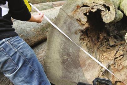 警方正在量楠木尺寸