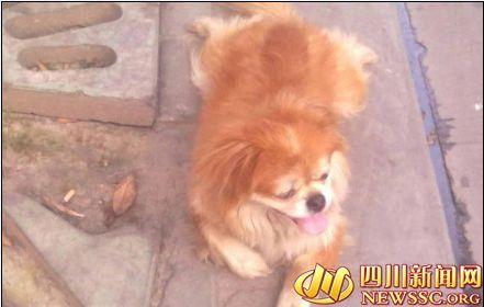 火锅店谈老板手机中的流浪狗照片