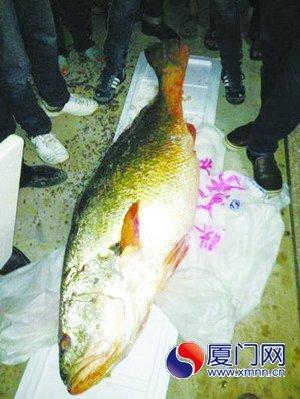 微博传言捕获的大鱼