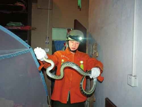 在居民家中抓获大蛇。