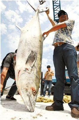 168斤的大鱼拖着船跑了40分钟