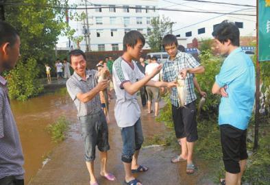 万斤鱼儿游上公路 四川达州市民停车捡鱼