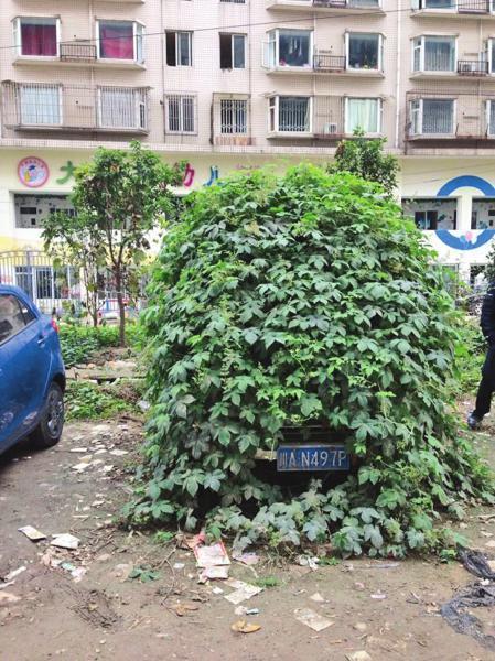 僵尸车被藤蔓覆盖。