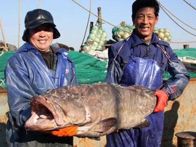 渔民抓野生海鲫鱼