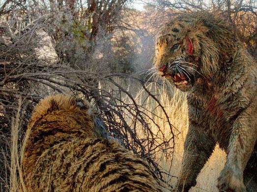 动物界王者之战