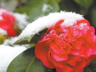 四川各地迎初雪