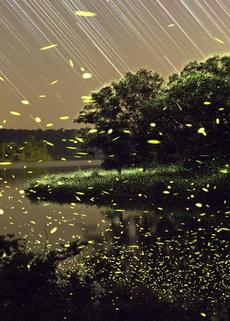大自然中萤火虫的生活轨迹图